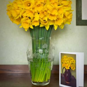 40-stems-of-pembrokeshire-daffodils