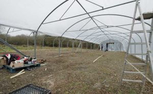 erecting-polytunnel-at-Brooksgrove-Farm-Feb-2017