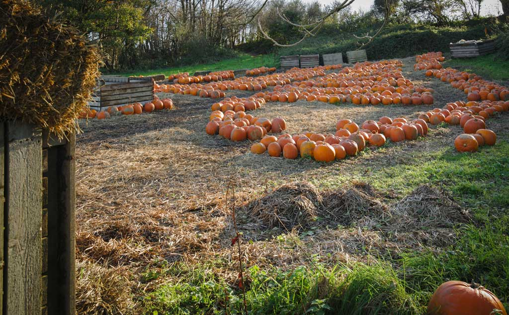 Brooksgrove-Farm-Pumpkins-Patch-2017-update
