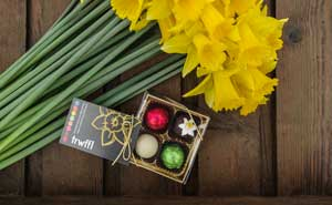 Pembrokeshire Daffodils and Chocolates