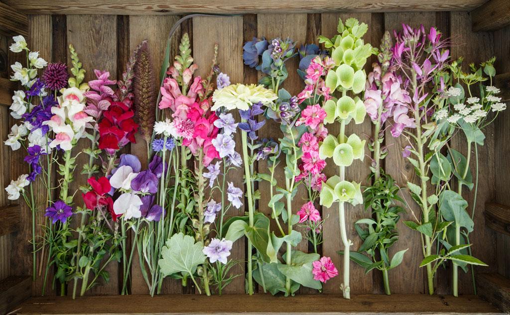 Brooksgrove-Farm-Cut-Flowers