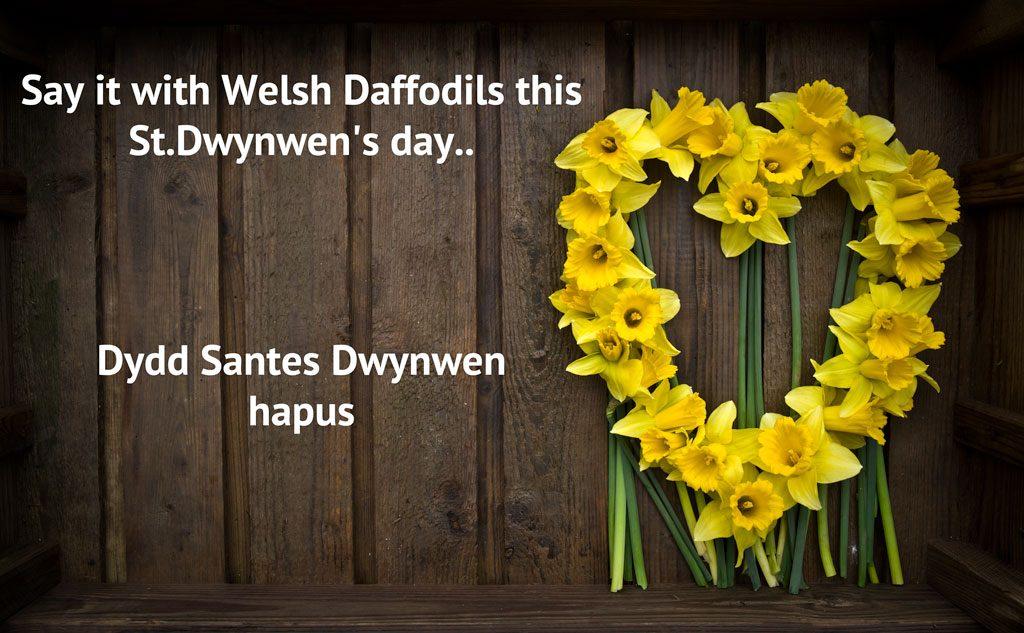 Daffodils for St.Dwynwen's Day
